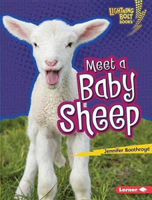 Meet a Baby Sheep by Jennifer Boothroyd