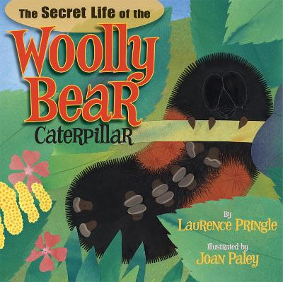 The Secret Life of the Woolly Bear Caterpillar by Laurence Pringle