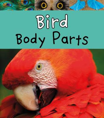 Bird Body Parts by Clare Lewis