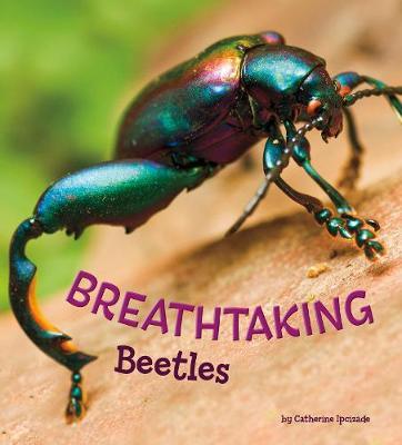 Breathtaking Beetles book