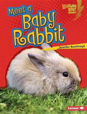Meet a Baby Rabbit by Jennifer Boothroyd