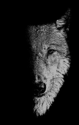 In the Company of Wolves: Werewolves, Wolves and Wild Children by Sam George