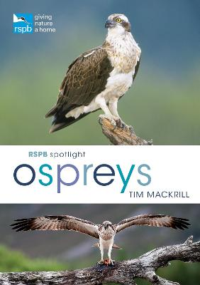 RSPB Spotlight Ospreys by Tim Mackrill
