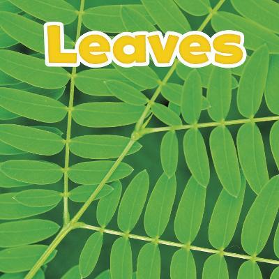 Leaves by Marissa Kirkman