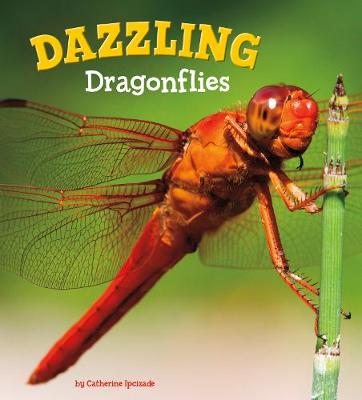 Dazzling Dragonflies by Catherine Ipcizade