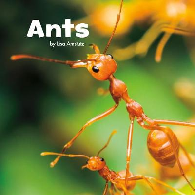 Ants by Lisa J Amstutz