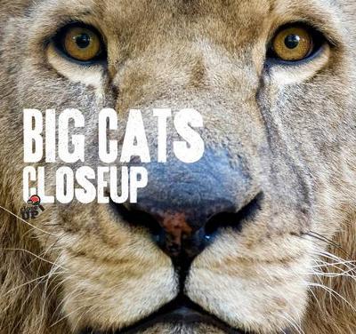 Big Cats CloseUp by Carla Litchfield