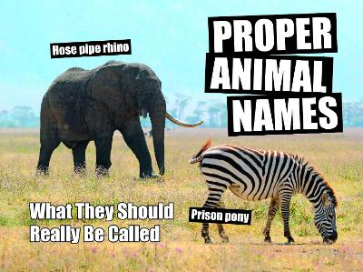 Proper Animal Names: What They Should Really Be Called by Spike Hudson
