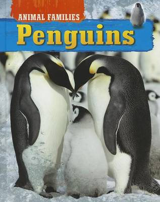 Penguins by Tim Harris