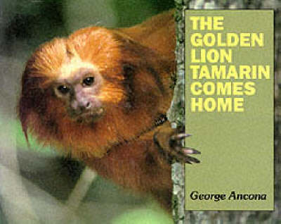 The Golden Lion Tamarin Comes Home by George Ancona