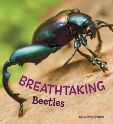 Breathtaking Beetles by Catherine Ipcizade