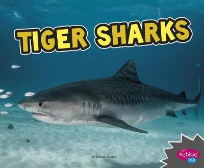 Tiger Sharks by Deborah Nuzzolo
