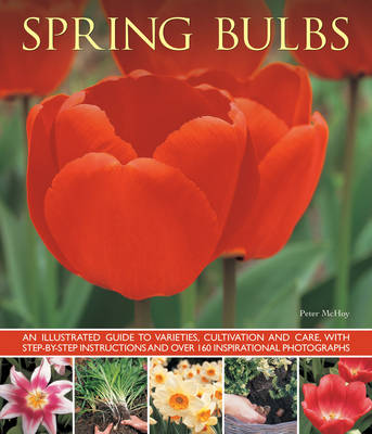 Spring Bulbs by Peter McHoy