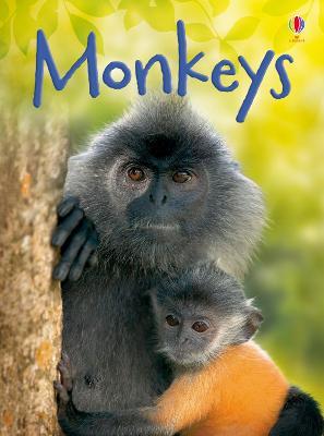 Monkeys by Lucy Bowman