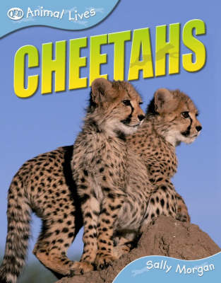 Cheetahs by Sally Morgan