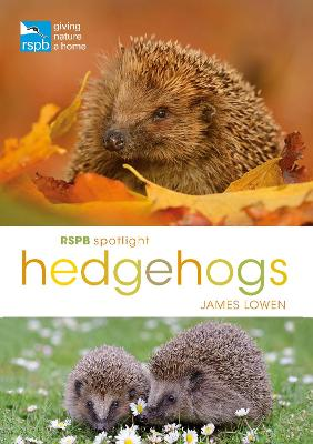 Rspb Spotlight Hedgehogs by James Lowen