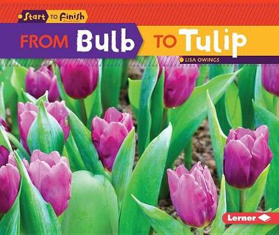 From Bulb to Tulip by Lisa Owings