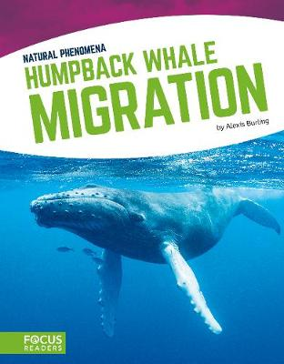 Humpback Whale Migration by Alexis Burling