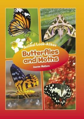 Butterflies and Moths by Joanne Mattern