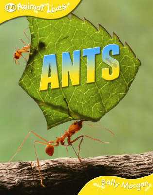 Ants by Sally Morgan