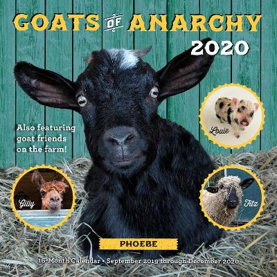 Goats of Anarchy 2020: 16 Month Calendar  September 2019 Through December 2020 by Leanne Lauricella