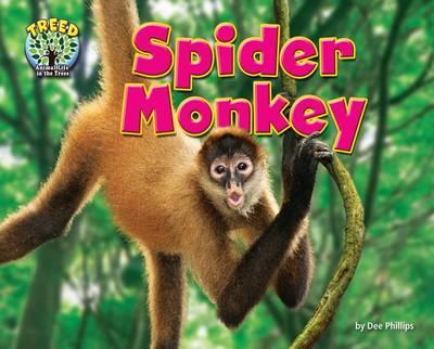 Spider Monkey by Dee Phillips