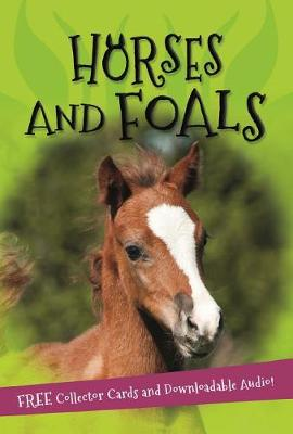 It's All About... Horses and Foals by Kingfisher Books
