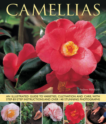 Camellias by Andrew Mikolajskj