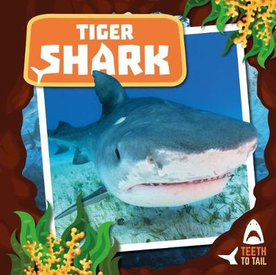 Tiger Shark: Teeth to Tail by Robin Twiddy