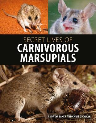 Secret Lives of Carnivorous Marsupials by Andrew Baker