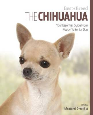 Chihuahua Best of Breed by Margaret Greening
