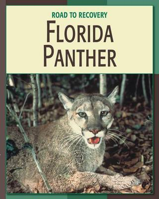 Florida Panther book