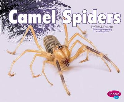 Camel Spiders book