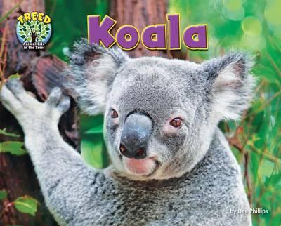 Koala by Dee Phillips