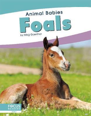 Animal Babies: Foals book