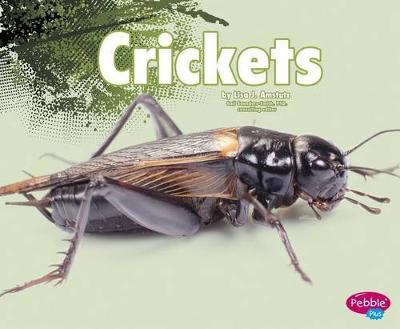 Crickets by Nikki Bruno Clapper