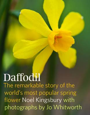 Daffodil by Noel Kingsbury
