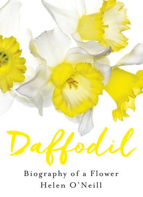 Daffodil by Helen O'Neill