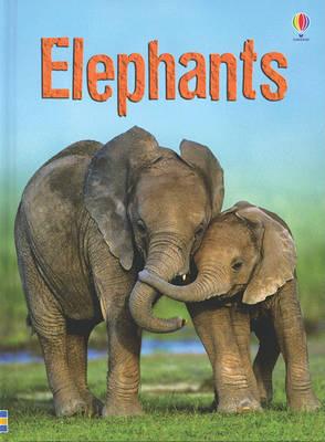 Elephants by James Maclaine