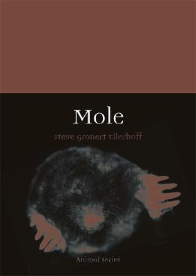 Mole by Steve Gronert Ellerhoff