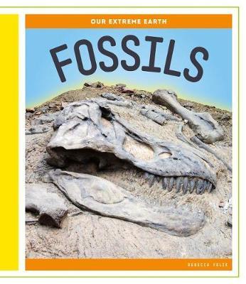 Fossils by Rebecca Felix