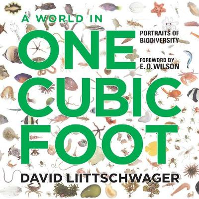 A World in One Cubic Foot by David Liittschwager