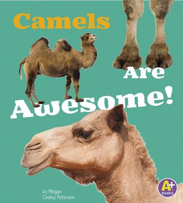 Camels Are Awesome! by Allan Morey