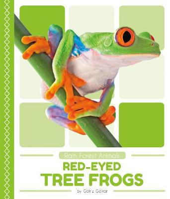 Red-Eyed Tree Frogs by Golriz Golkar