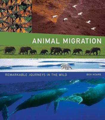 Animal Migration by Ben Hoare