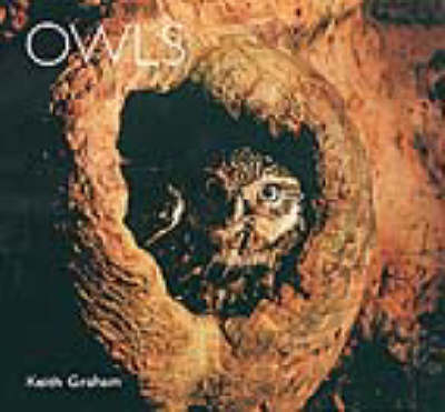 Owls by Keith Graham