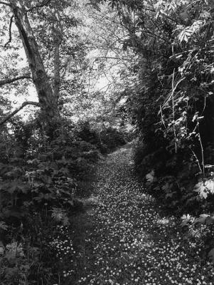 Robert Adams: An Old Forest Road by Thomas Zander