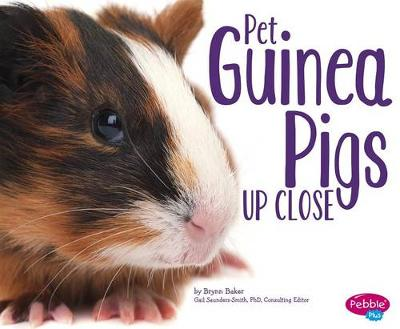 Pet Guinea Pigs Up Close by Gail Saunders-Smith
