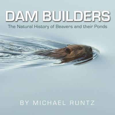 Dam Builders by Michael Runtz