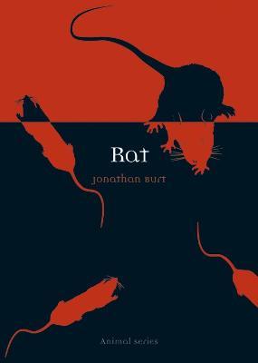 Rat by Jonathan Burt